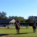 Yearlings going to the track.