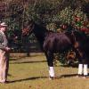 Miller with Sea Hero in Aiken, SC.  photograph courtesy of Ginny Southworth.